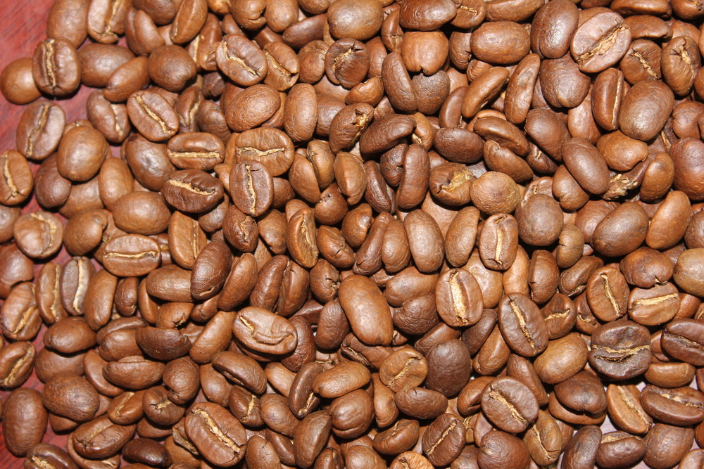 Roasted coffee bean Catimor
